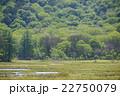 尾瀬 湿原 新緑の写真 22750079