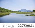 尾瀬 湿原 新緑の写真 22750081