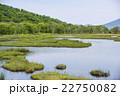 尾瀬 湿原 新緑の写真 22750082