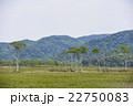尾瀬 湿原 新緑の写真 22750083
