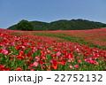 花畑 天空のポピー 秩父高原牧場の写真 22752132