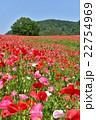 花畑 天空のポピー 秩父高原牧場の写真 22754969
