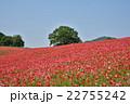 花畑 天空のポピー 秩父高原牧場の写真 22755242