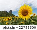 フラワー 花 ひまわりの写真 22758600