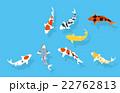 錦鯉の群れ 22762813