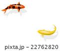 2尾の錦鯉 22762820