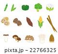 野菜 素材 22766325
