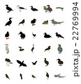 Set black and white silhouettes of birds: dove 22769994