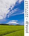 茶畑とレンズ雲 22771137