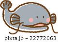 ナマズ 22772063