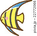 エンゼルフィッシュ 22772066