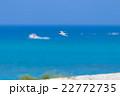 アジサシ 鳥 海の写真 22772735