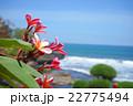 バリ島の海と花 22775494