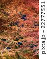 夜の紅葉狩り 22777551