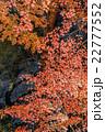 夜の紅葉狩り 22777552