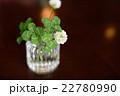オシャレなテーブルの上の四つ葉のクローバーたちと花 22780990