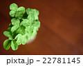 テーブルの上のたくさんの四つ葉のクローバーたち 22781145
