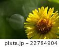 オゼミズギク 22784904