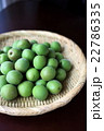青梅(古城梅) 22786335