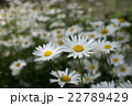 植物 花 咲くの写真 22789429