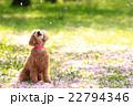 桜吹雪だね♪ 22794346