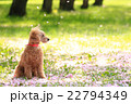 桜吹雪だね♪ 22794349