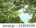 木漏れ日 22809280