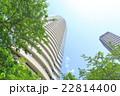 爽やかな緑と高層ビル 22814400