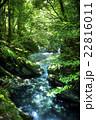 新緑の白倉峡 22816011
