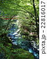 新緑の白倉峡 22816017