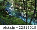 新緑の白倉峡 22816018