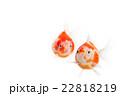 金魚05 22818219
