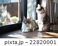 のんびり猫 22820001