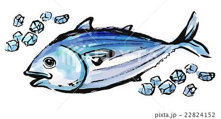 筆描き 魚 カツオ 22824152