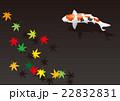 錦鯉と紅葉 22832831