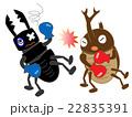 昆虫のボクシング 22835391