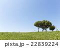 青空 緑 木の写真 22839224
