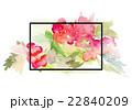 水彩画 プランツ 植物のイラスト 22840209