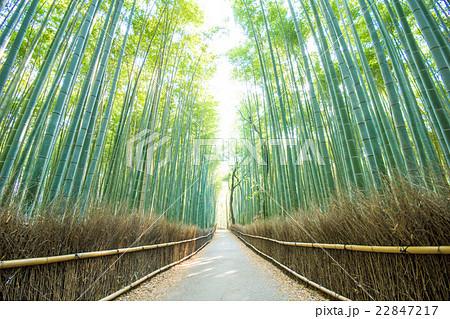 京都嵐山・竹林の道 22847217