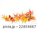 紅葉 モミジ 葉の写真 22854667