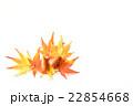 紅葉 モミジ 葉の写真 22854668