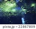 優雅に泳ぎ回るたくさんの魚たち1 22867809