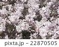 フラワー 花 モクレンの写真 22870505