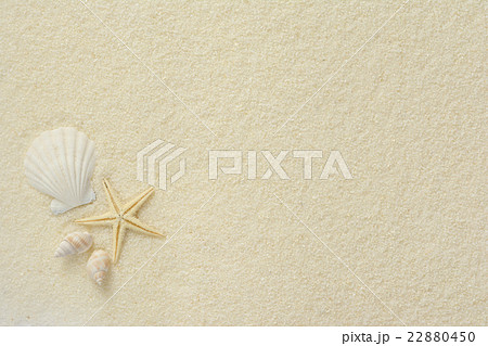 ヒトデと貝殻 白砂背景の写真素...