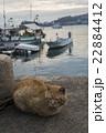 港町の猫 22884412