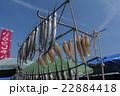 干物作り 広島/鞆の浦 22884418