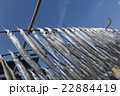 干物作り 広島/鞆の浦 22884419