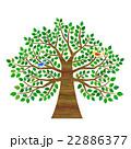 木 鳥 大木のイラスト 22886377
