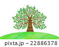 木 大木 丘のイラスト 22886378