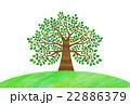 木 鳥 大木のイラスト 22886379